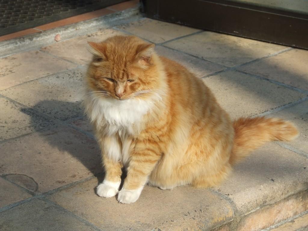 Eddie - School Cat (4)