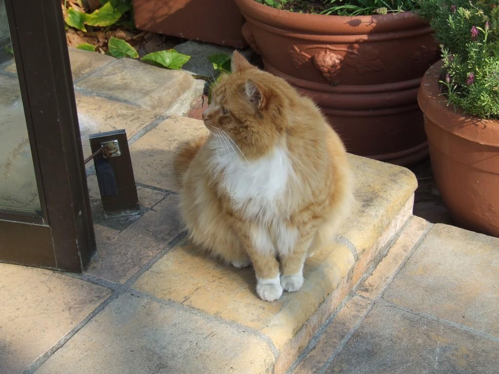 Eddie - School Cat (5)