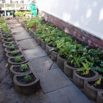 Garden Club 2012