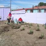 Planting lavendar at Lavendar Hill (1)