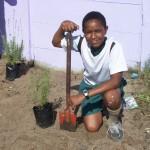 Planting lavendar at Lavendar Hill (7)