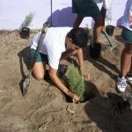 Planting lavendar at Lavendar Hill (9)
